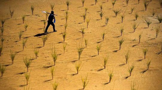 支付宝蚂蚁森林给别人浇水能量不足怎么解决?